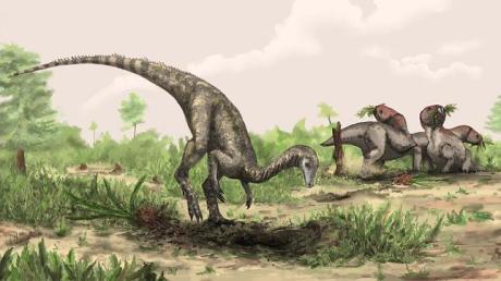 Nyasasaurus rfgcretyhgrtewct56