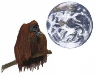 orangutan-640x523 dtgryfth