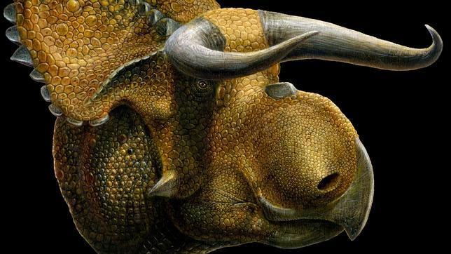 Nasutoceratops erfr343e
