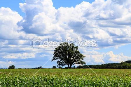 dep_30696803-Vermont-Cornfield-
