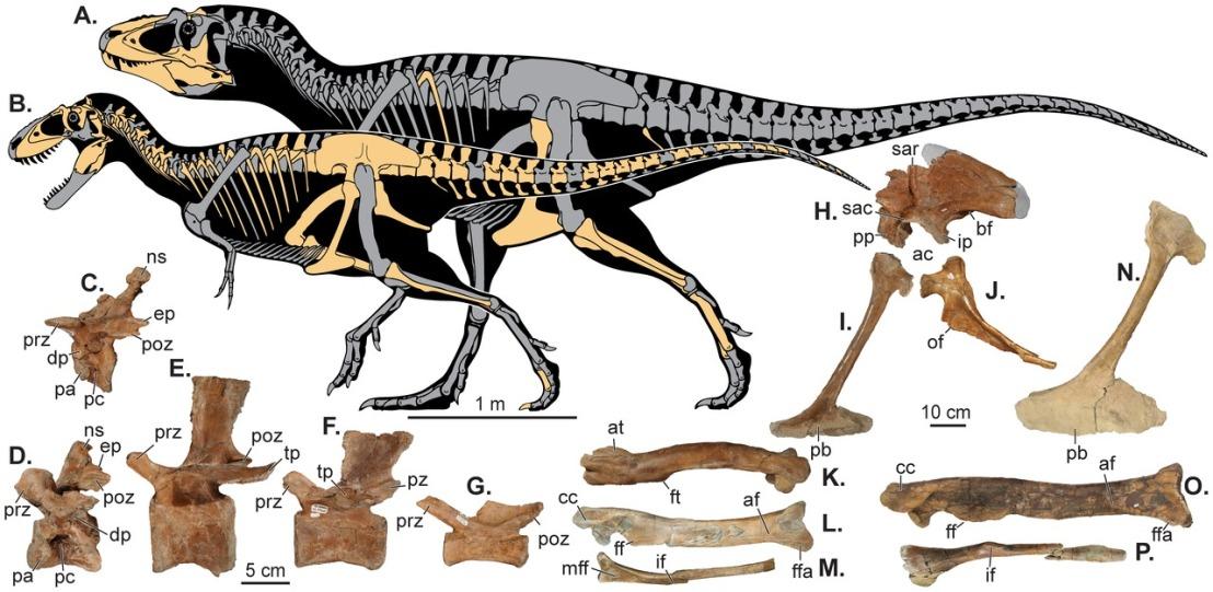 Figure 1 07-25-13 skeletals