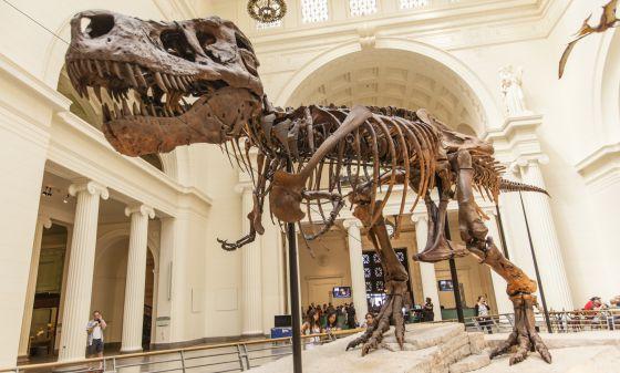 Esqueleto de tiranosaurio rex expuesto en el museo Field de Chicago. / RICHARD T. NOWITZ/CORBIS