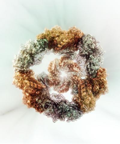 engineered-nanocage fgrthyh