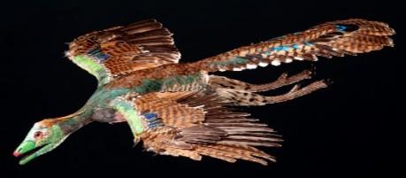 Reconstrucción en vida de un Archaeopteryx/ R. Liebreich; Copyright Bayerische Staatssammlung für Paläontologie und Geologie