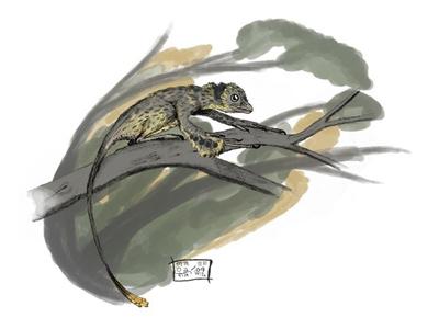 1405013281531dinosauriordn Scansoriopteryx