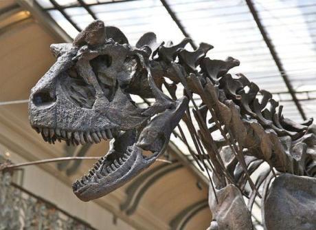 650_1000_dinosaurio tchtyhcyt