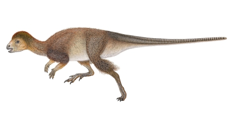 LLENO DE PLUMAS   El dinosaurio emplumado, que se muestra en la ilustración, sugiere que el plumaje puede haber sido mucho más común entre los dinosaurios de lo que los científicos sospechaban.