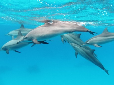 dolphins-580x435 dghy